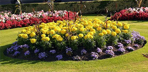 квіти, клумби, київзеленбуд